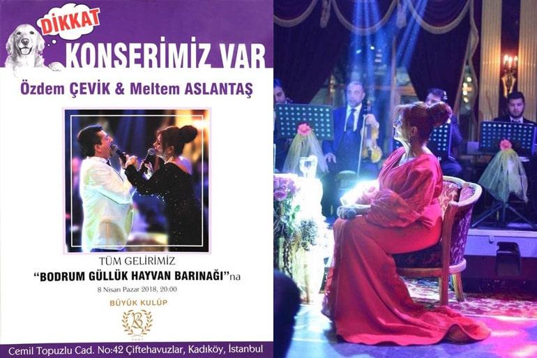 gulluk-hayvan-barinagi-konser